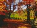 fall-scene-nancy-cetullo-copy-jpg