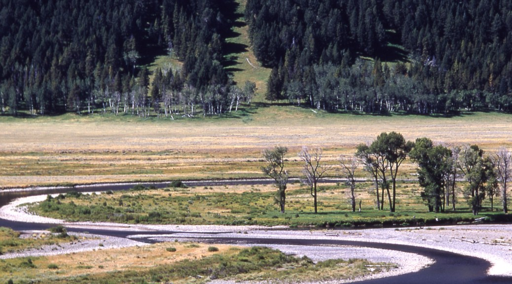 Image #1 for 3_7_14 Yellowstone Wolves-300