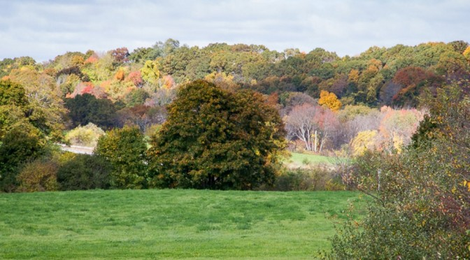 Field framed in fall colors off Gregory Street, Middleton, where Danvers State Hospital patients, we like to think, once worked away their blues - Judy Schneider photo