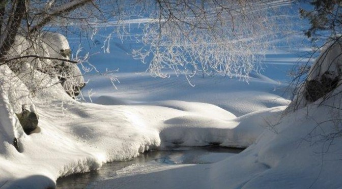 Image #1 for 1-30-15 Snowbound-1038