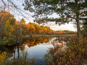 Fall colors above and reflected from a very calm Ipswich River at sunset as seen and photographed from Logbridge Landing, Middleton. - Judy Schneider photo
