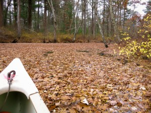 Ipswich River channel and Peabody-Middleton line, early November: Dry leaves have paved the river bank to bank for long stretches. - Judy Schneider photo