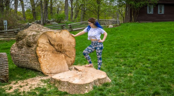 TOPSFIELD ASH CUT DOWN,PIECE OFF TO MIDDLETOWN