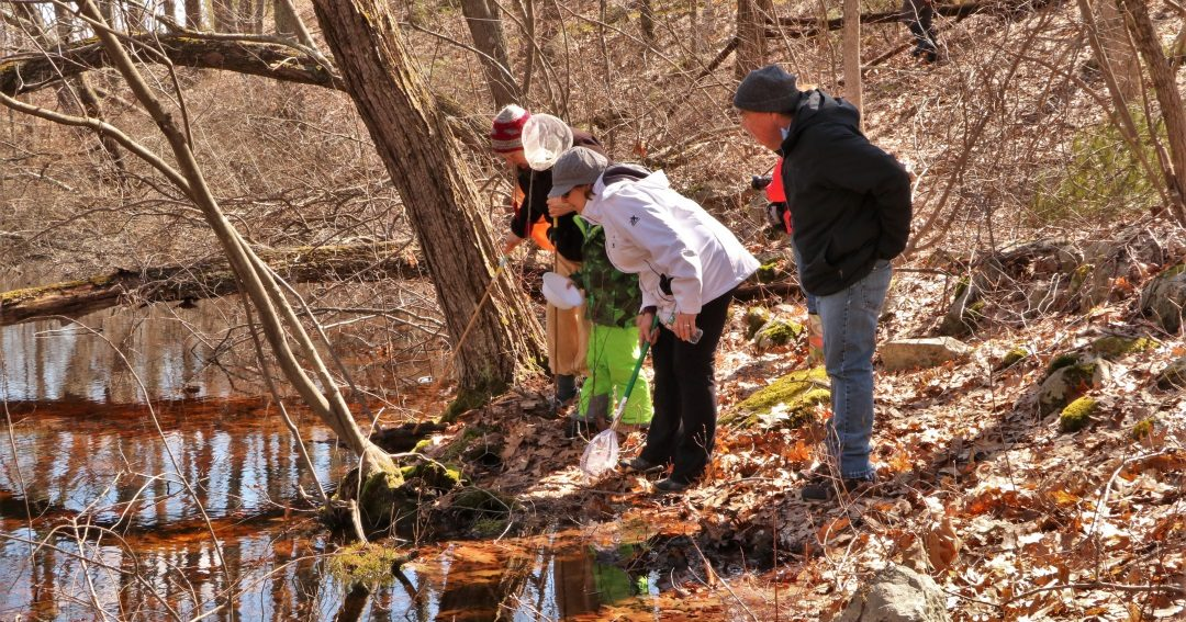 MIDDLETON STREAM TEAM'S VERNAL POOL HIKE, APRIL 7, 2018