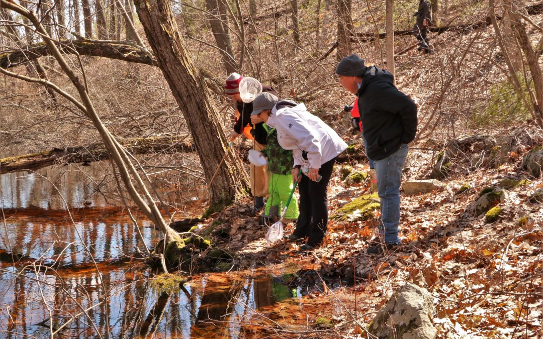 Middleton Stream Team's Vernal Pool Talk and Spring Hike