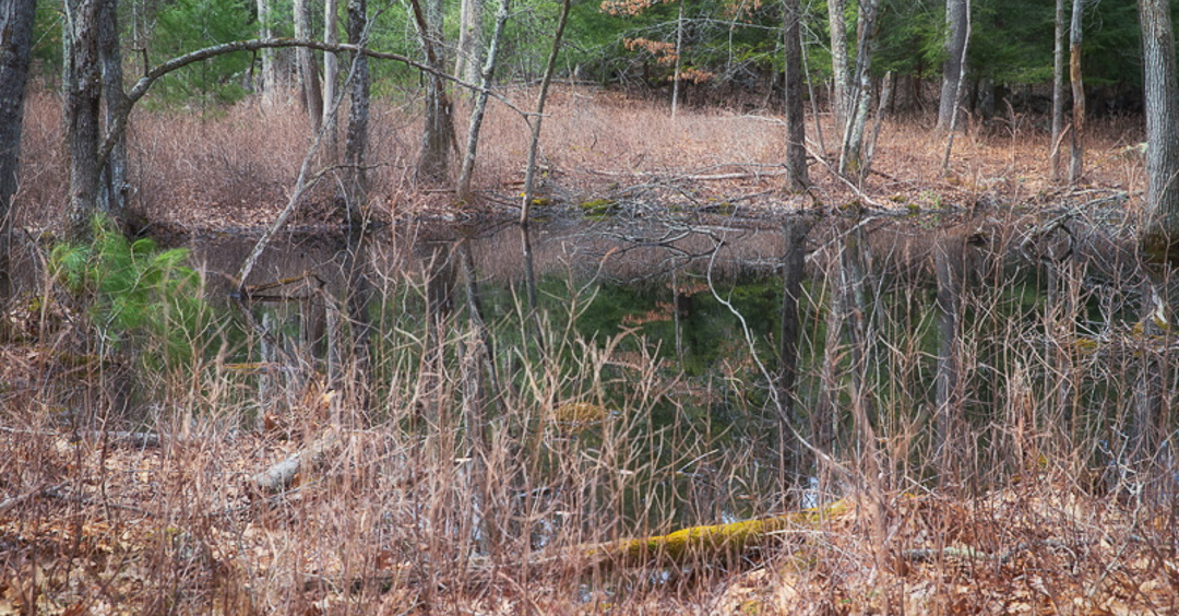 THE STREAM TEAM'S SPRING VERNAL POOL HIKE HAS BEEN CANCELLED
